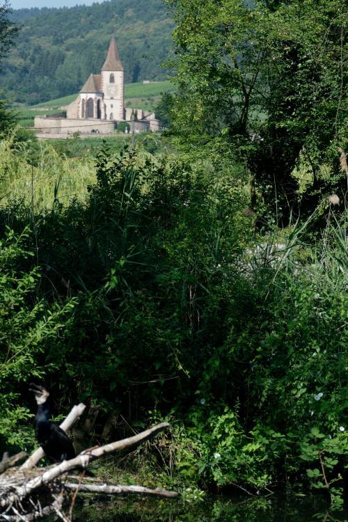 J5 - parc aux cigognes - Hunawihr (3).jpg