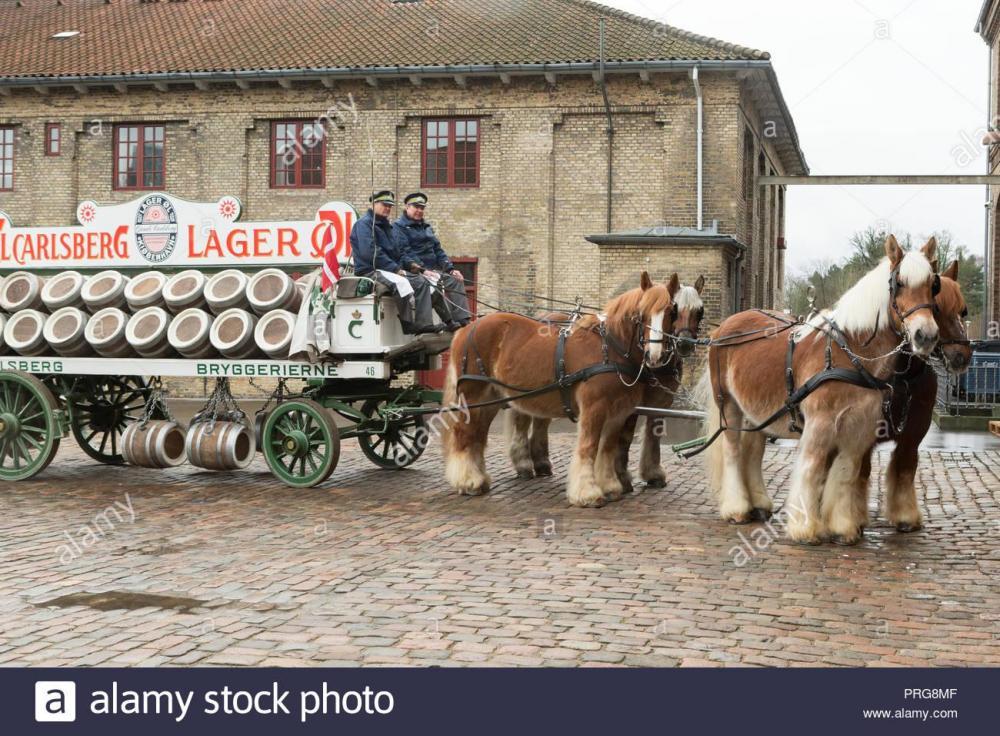 projet-de-projet-de-lourds-chevaux-travaillant-au-jutland-rares-brasserie-carlsberg-historique-copenhague-danemark-prg8mf.jpg