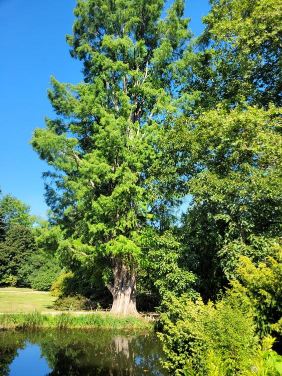 1012396141_valleauxloups-arboretum(4).jpg